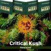 critical-kush-barneys-farm-feminized-semena-konopi