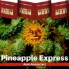pineapple-express-barneys-farm-autoflower-feminized-semena-konopi