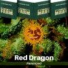 red-dragon-barneys-farm-feminized-semena-konopi