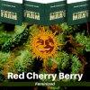 red-cherry-berry-barneys-farm-feminized-semena-konopi