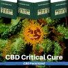 critical-cure-cbd-barneys-farm-feminized-semena-konopi