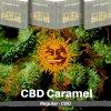 caramel-cbd-barneys-farm-regular-semena-konopi
