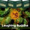 laughing-buddha-barneys-farm-feminized-semena-konopi