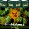 shishkaberry-barneys-farm-feminized-semena-konopi