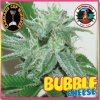 big buddha bubble cheese