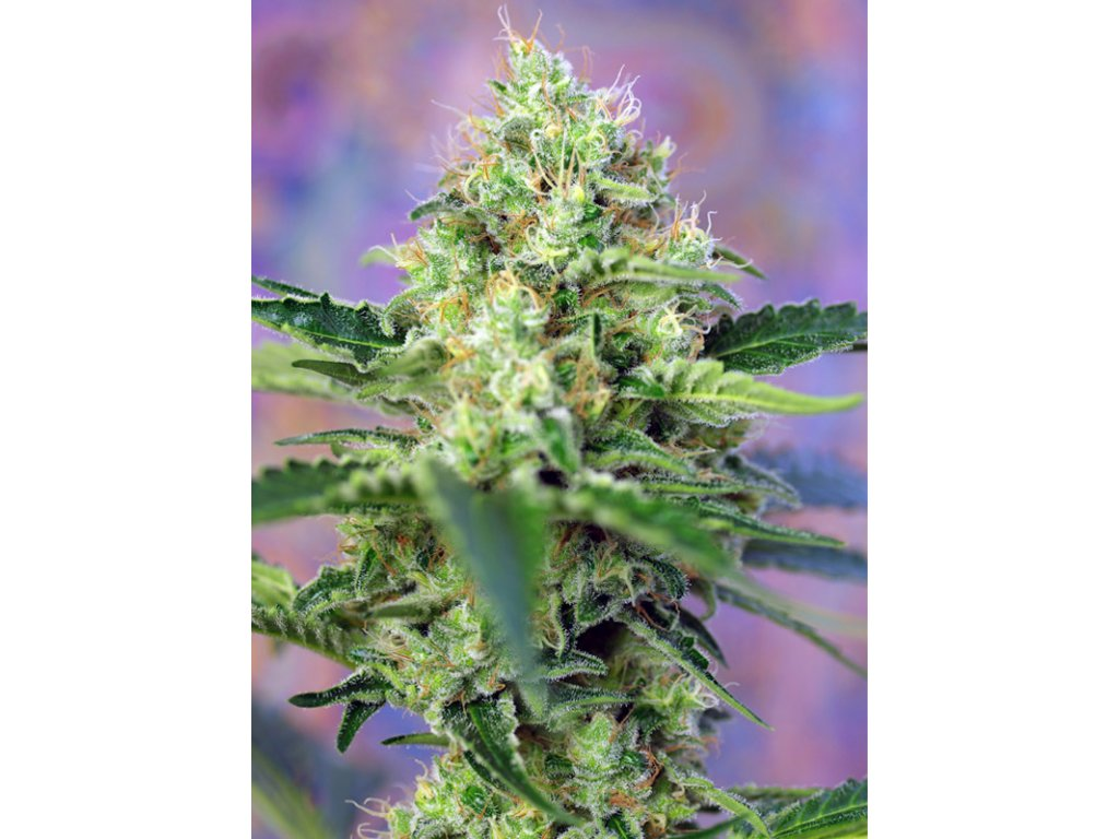 Crystal Candy (Sweet Seeds)