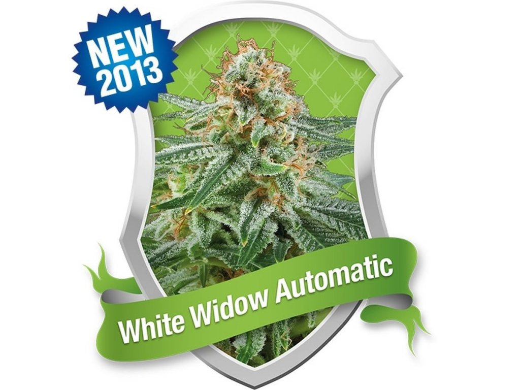 09304 white widow automatic royal queen seeds