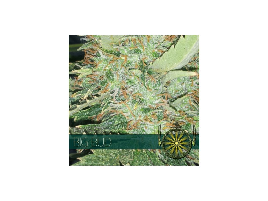 vision seeds big bud 500x500 1