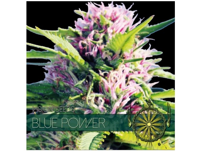 vision seeds blue power 500x500 1