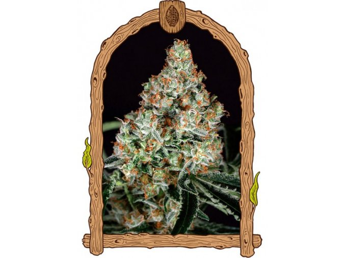 exotic seeds zkittalicious