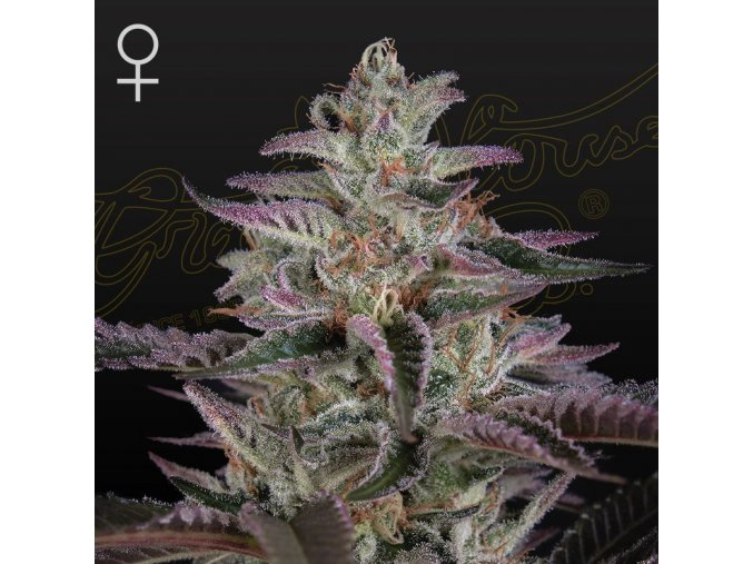 greenhouse seeds banana krumble feminized