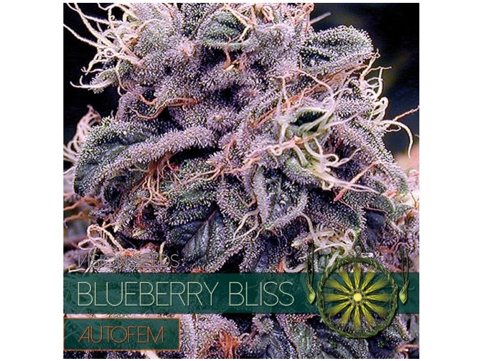 autofem vision seeds blueberry bliss 500x500 1