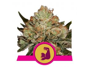 Hulkberry | Royal Queen Seeds