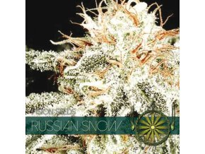 vision seeds russian snow 500x500 1