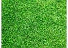 Golfový trávník