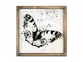 Obraz motýl OBX1047