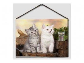 Obraz kočky BD573