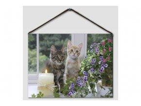 Obrázek kočky BD563