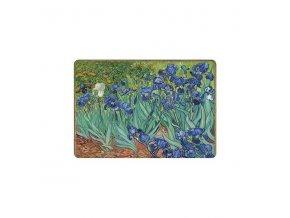 kosatce iris