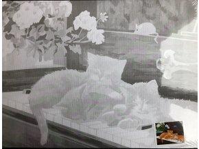 Plátno s motivem  - koťata