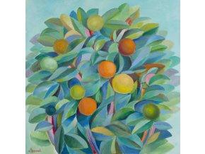 citrusova zahrada