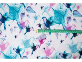 SHAPe kolibrici 3