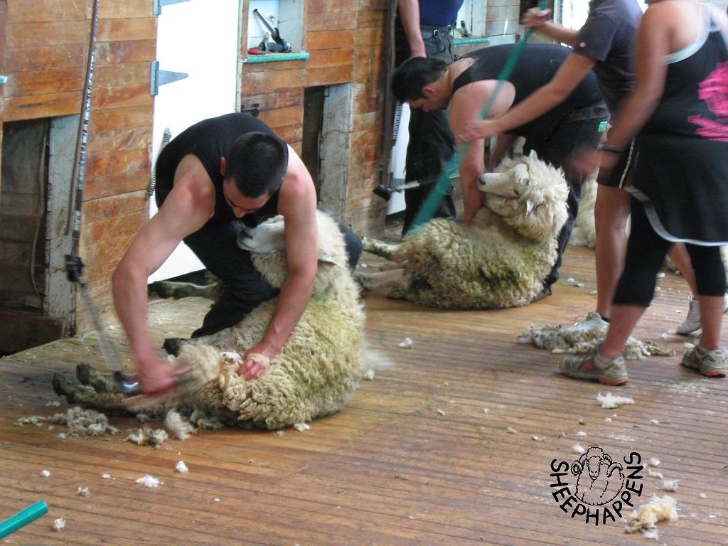 """Proč a jak vzniklo """"Sheephappens""""?"""