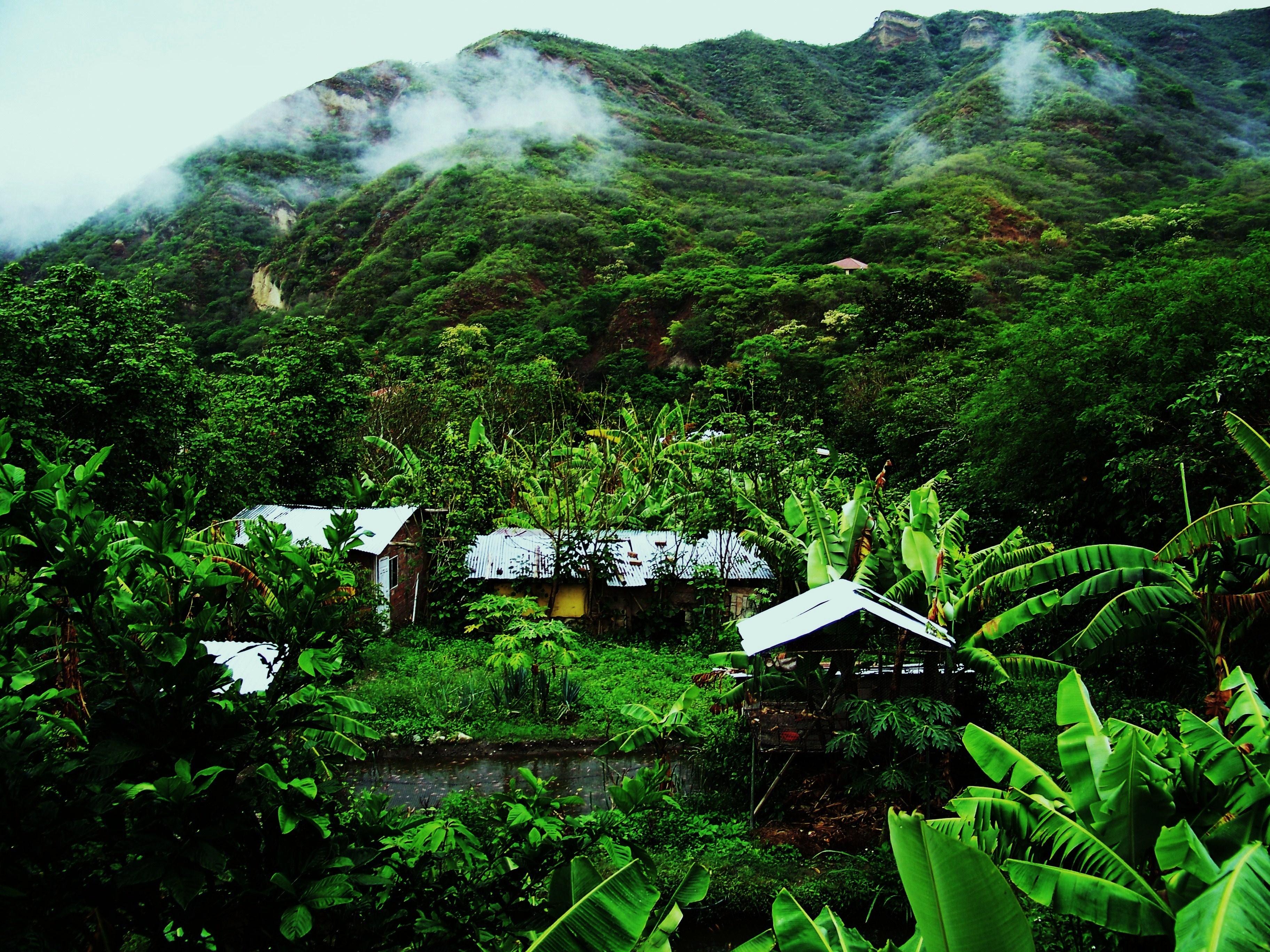 Pohled_na_zahradu_z_Farmy_na_jihu_Ekvádoru