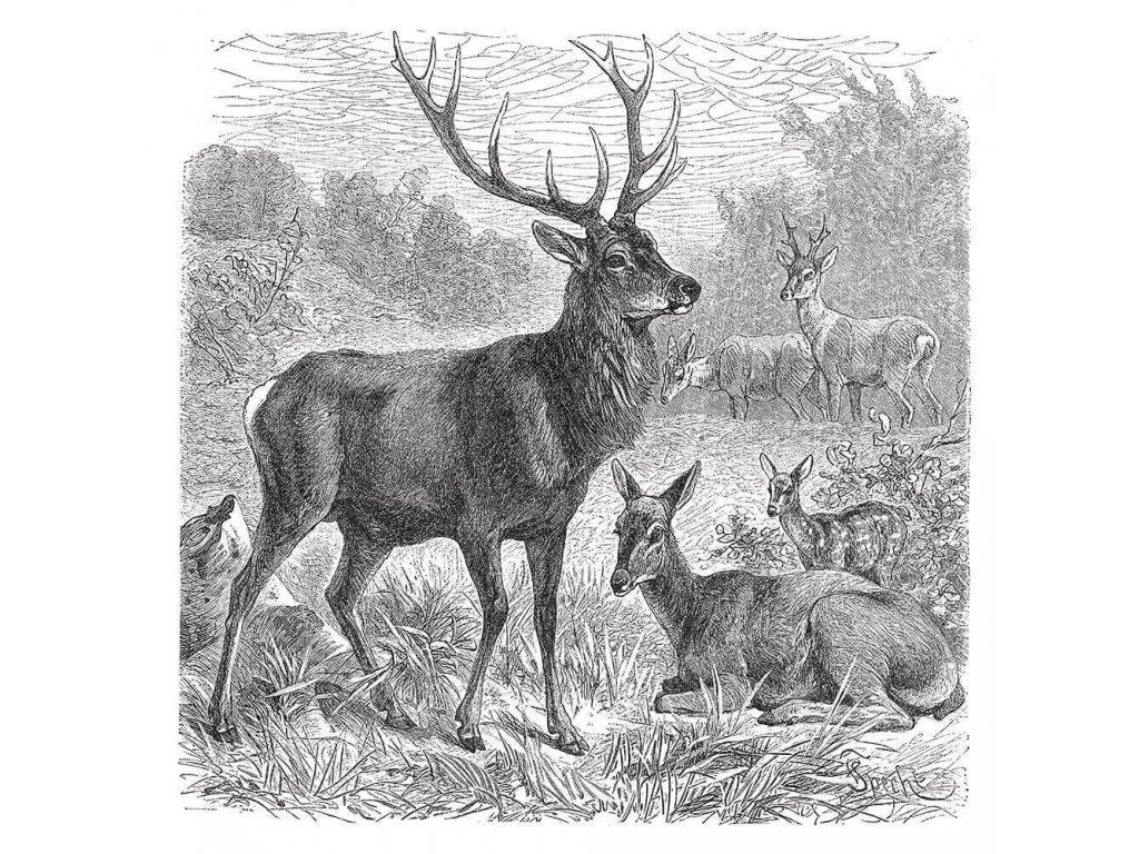 Dekorační obraz pro myslivce 30 x 30 cm - jelen