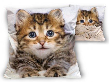 Polštář s obrázkem kočky