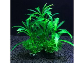 Rostliny do akvária PLANTS