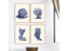Obrazy Coral Sea