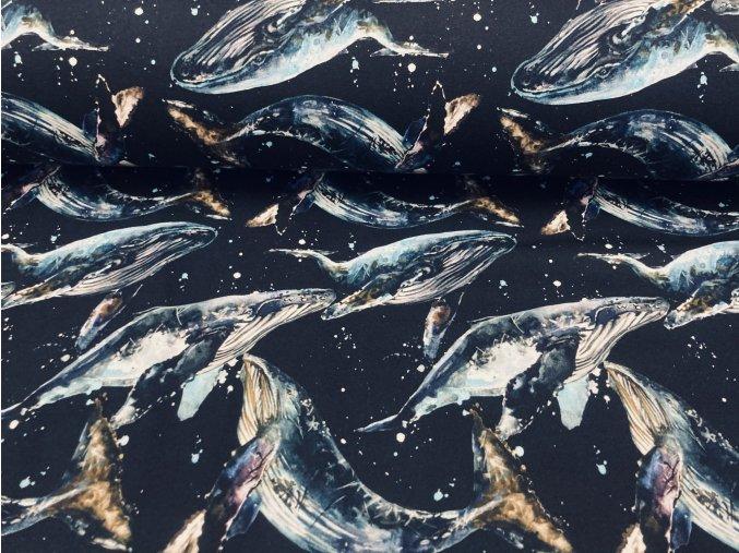Teplákovina nepočesaná velryby na černé