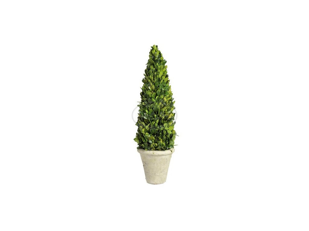 Buxusový stromek CONUS