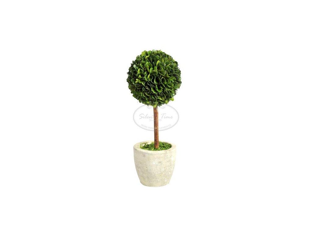 Buxusový stromek BALL H