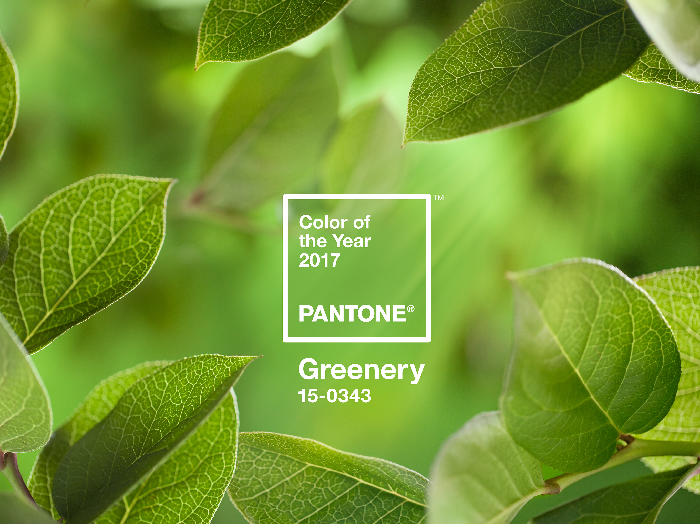 PANTONE-Color-of-the-Year-2017-Greenery-15-0343-leaves-2732x2048