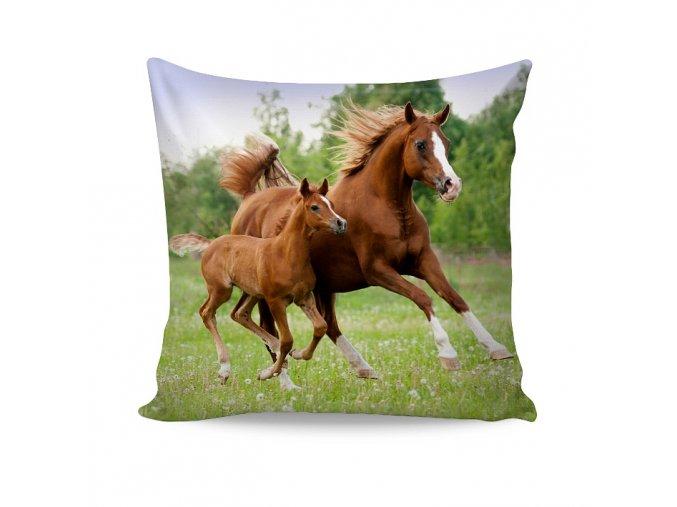 povlak little horse 1