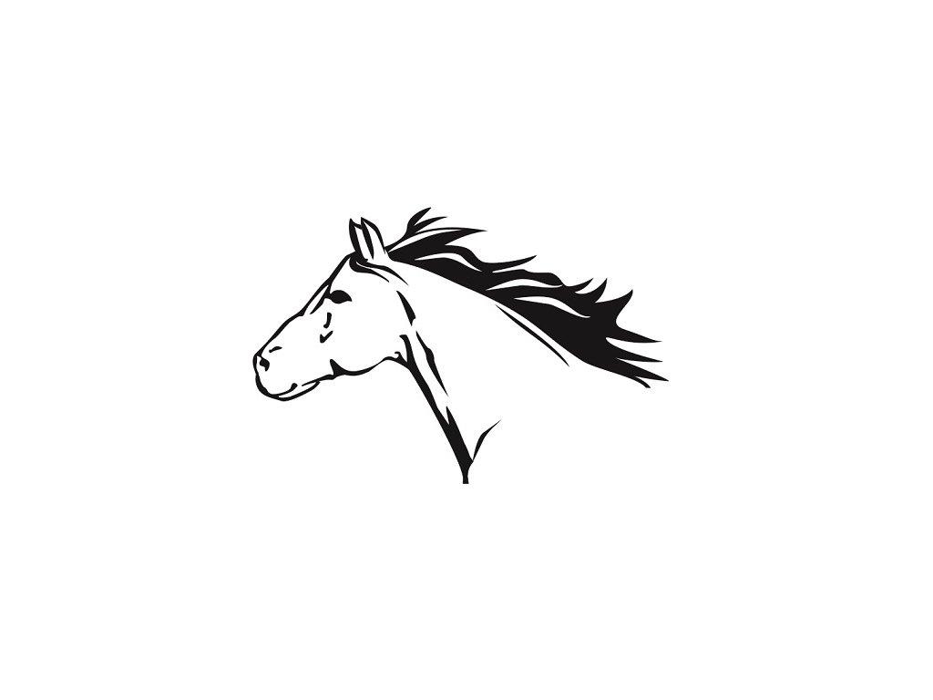 Kůň 2 pískování obrázku
