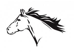 Kůň 2 pískování motivu