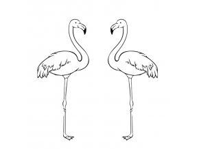 Flamingo 0015