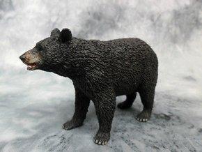 Medvěd americký černý