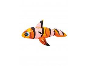 ryba klaun nafukovaci