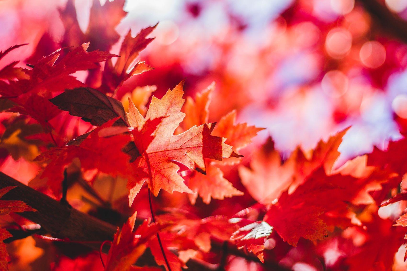 Podzim 1