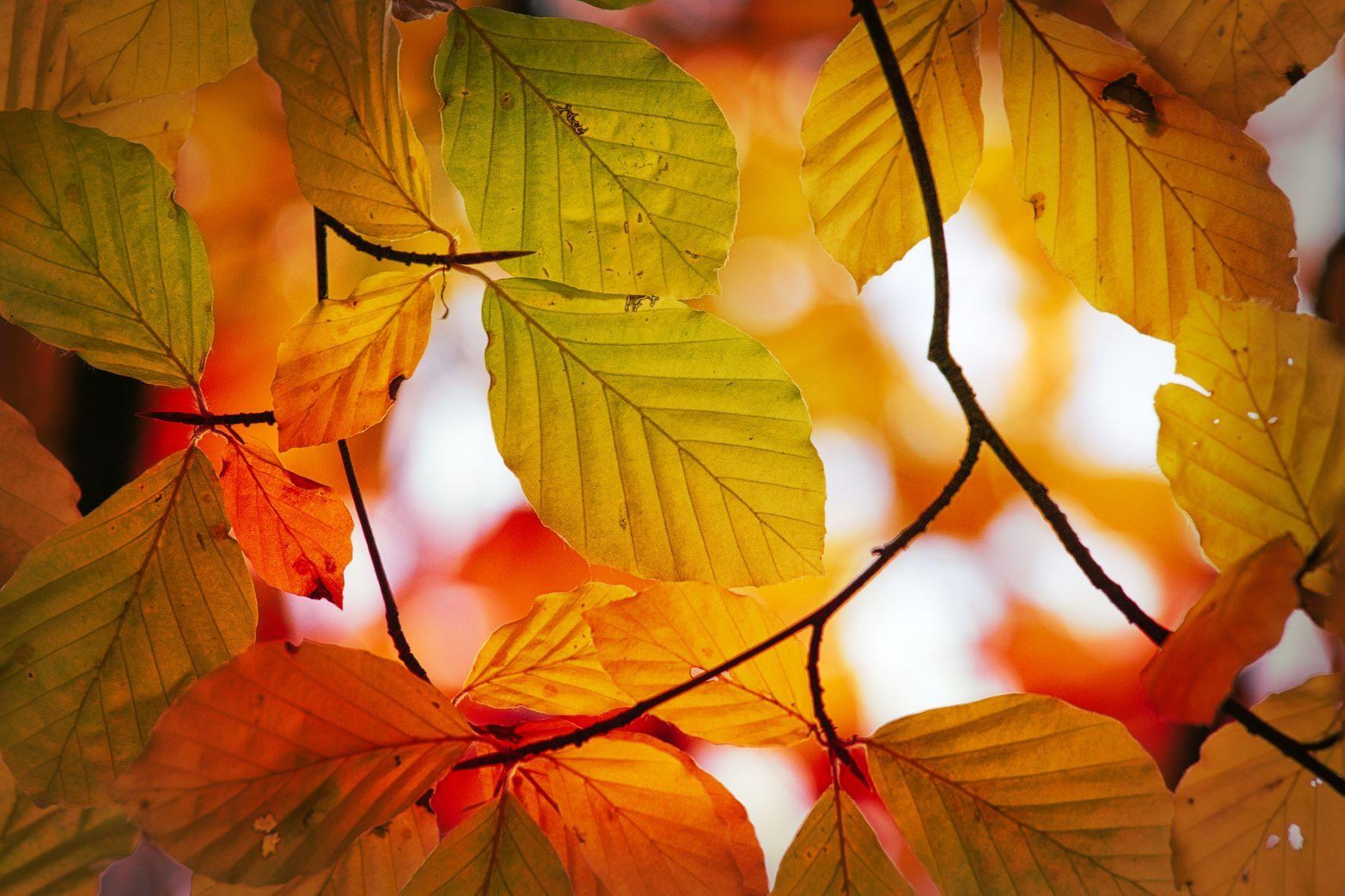 Podzim 3