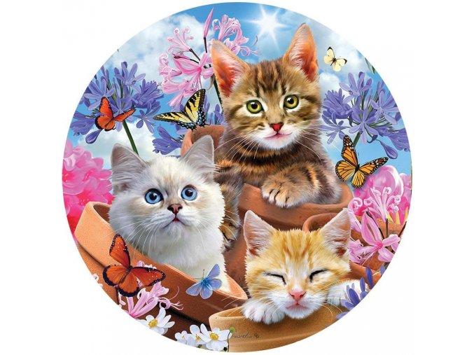 Koťátka 1