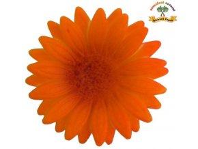 gerbera oranžovo hnědá