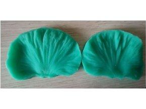 Žilkovač okvětní list velký