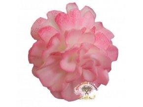 karafiát růžový stříkaný
