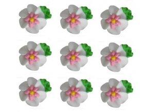 velké bílé květy