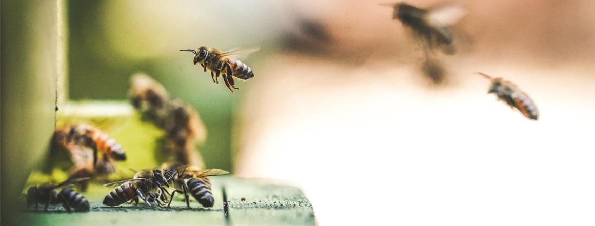 Naše včelnice